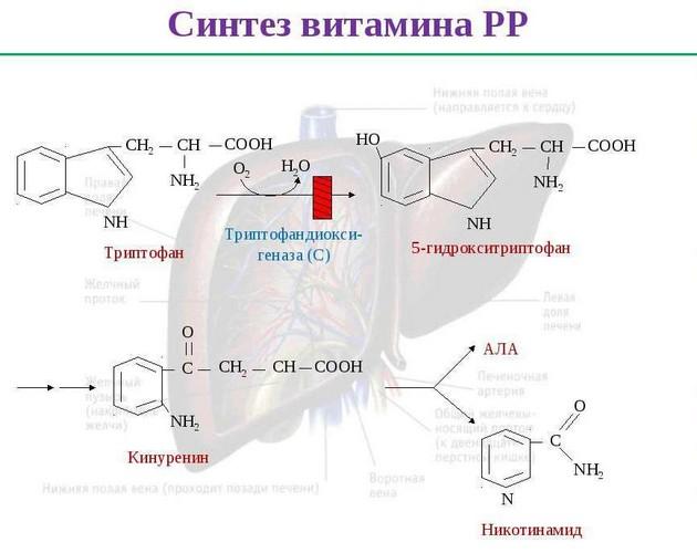 Синтез витамина РР ниацин никотиновая кислота