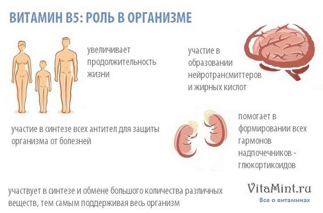 Витамин В5 (пантотеновая кислота) роль в организме