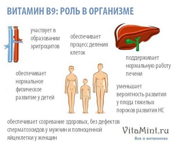Витамин В6 (фолиевая кислота) роль в организме