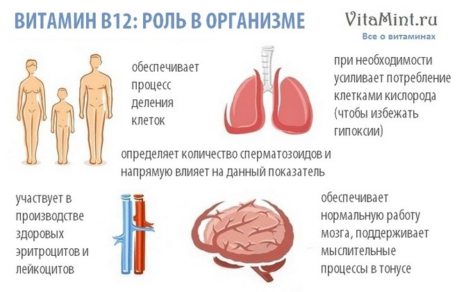 Витамин В12 цианокобаламин роль в организме