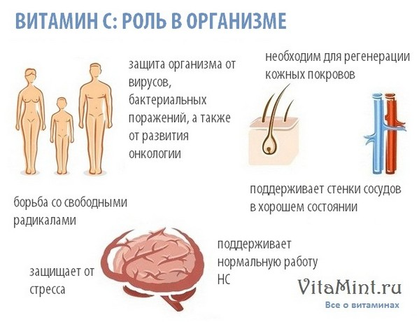Витамин С аскорбиновая кислота роль в организме