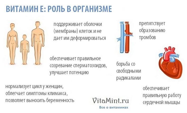 Витамин Е токоферол роль в организме